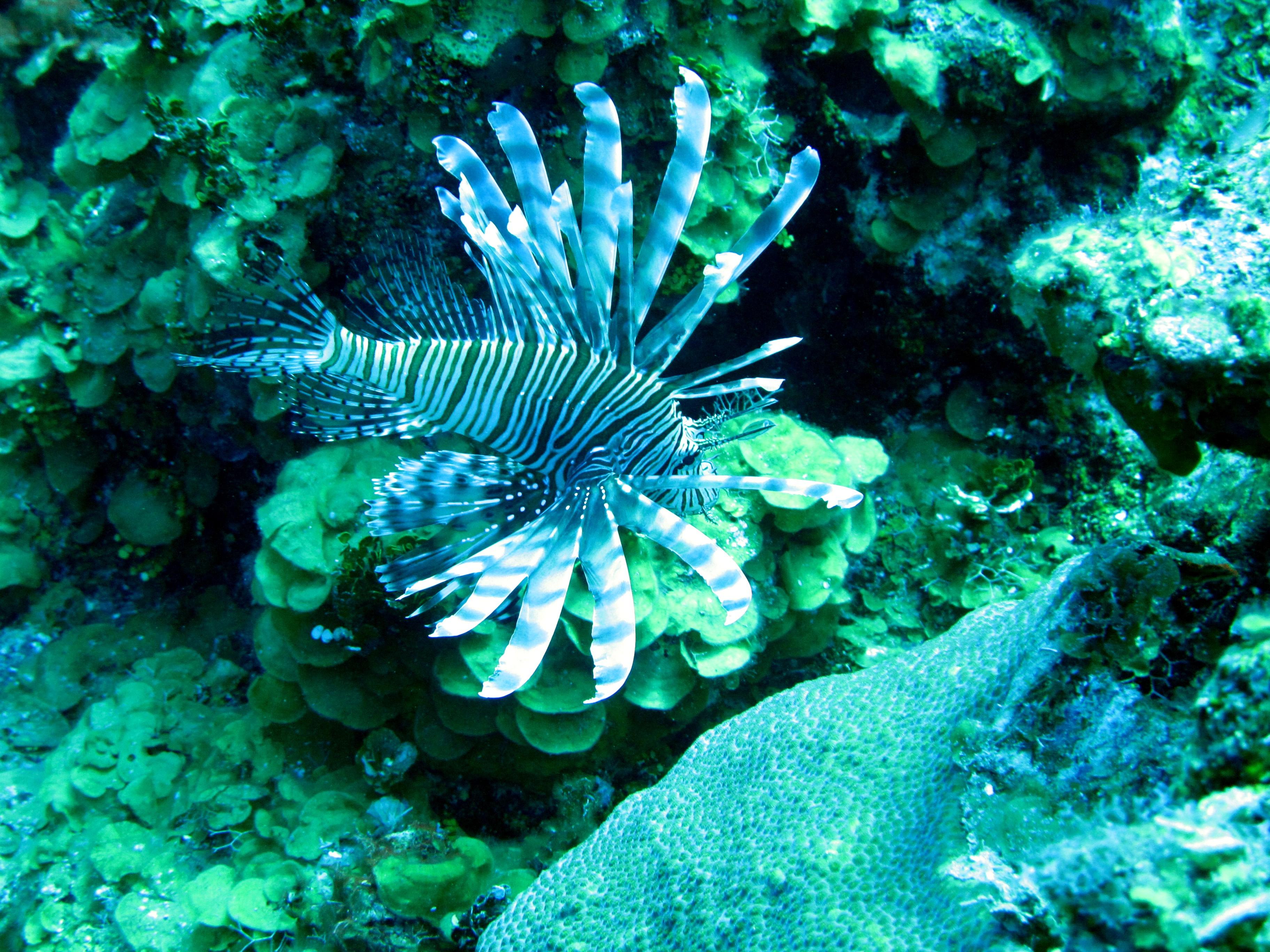 cayman 2011-4