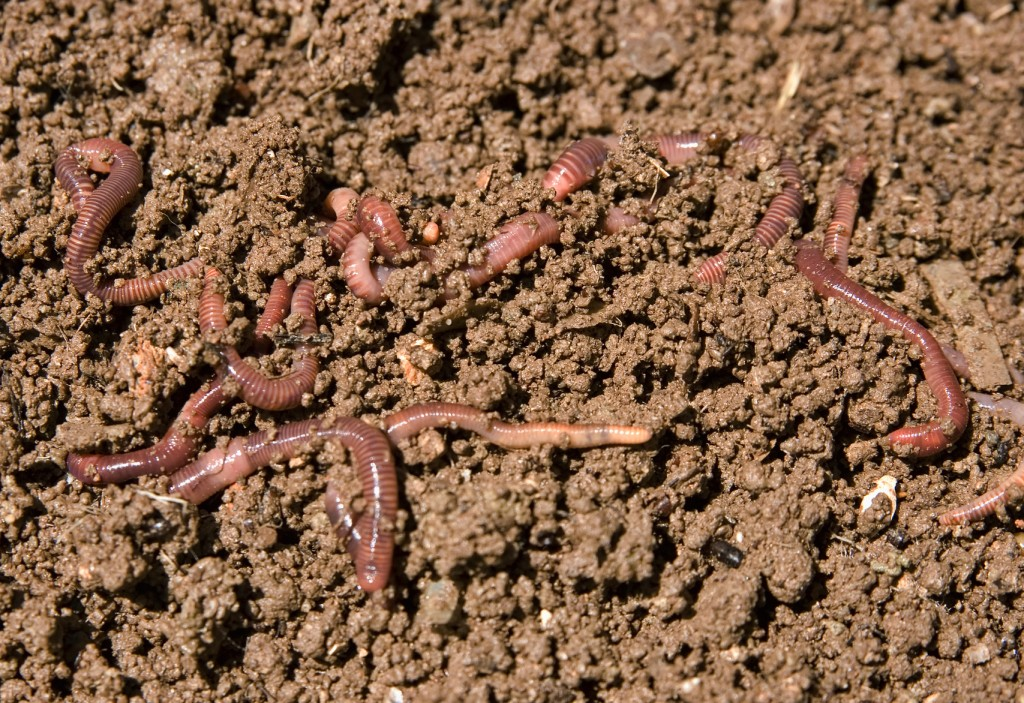 composting garden worms